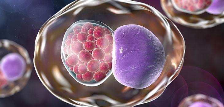 Infecção por Chlamydia: causas, sintomas e tratamentos