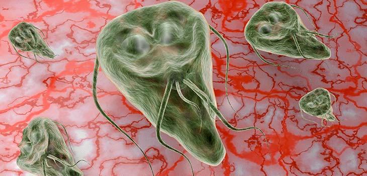 Giardíase: causas, sintomas e tratamentos