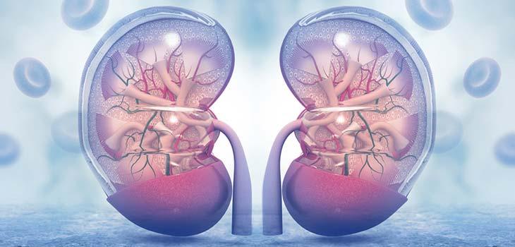 Insuficiência renal: causas, sintomas e tratamentos