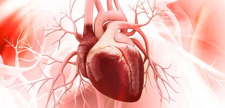 Sopro cardíaco: causas, sintomas e tratamentos